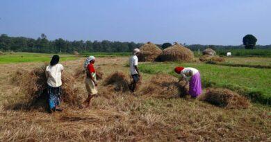 Ongoing Kharif crop procurement in Haryana