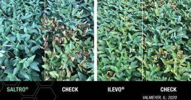 Saltro Fungicide Seed Treatment From Syngenta Proves Strong First Year Impact