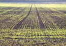 The best start for spring barley in Scotland