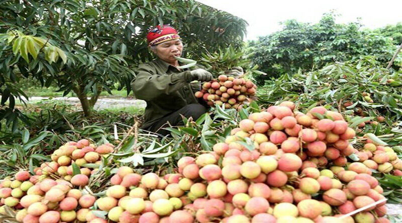Vegetables and fruits exports reached 3.26 billion USD in 2020