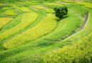 Indian Government promoting Natural Farming System under Bhartiya Prakritik Krishi Padhati scheme