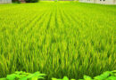 Agriculture schemes under implementation for small and marginal farmers by Indian Government