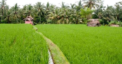 DBT launched Biotech KISAN Programme for improving Agriculture Productivity in NE Region