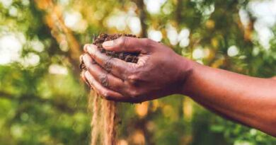 Yara invests in Boomitra to advance soil carbon capture