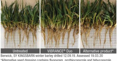 Seed treatment shows benefits in the North and Scotland
