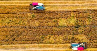 Bumper summer grain harvest auspicious start