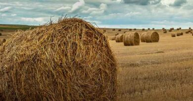 5 Tips for Buying Hay
