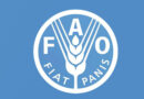 FAO and the private sector hand in hand to transform agri-food systems in the Near East and North Africa