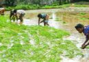 Symbiotics launches first 100% agricultural Green Bond in India with Samunnati