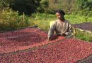 Effects of credit guarantee scheme in opening up lending to smallholder coffee cooperatives in Ethiopia examined
