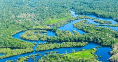 Management of world's forests must be water-centred