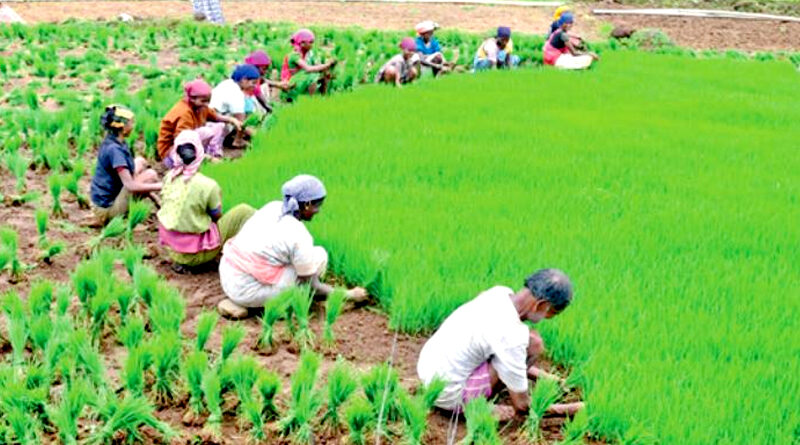 Agri Export Policy (AEP) focuses on Farmer Centric Approach