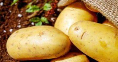 Safeguarding Scotland's bulb and potato sector