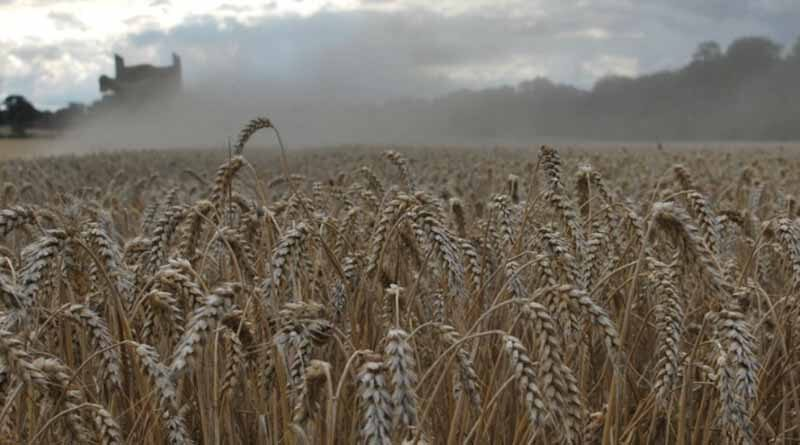 Winter wheat harvest results are indicating strong performance from hard group 4 varieties