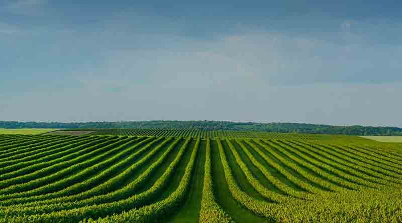 China unveils 5-year plan for agricultural green development