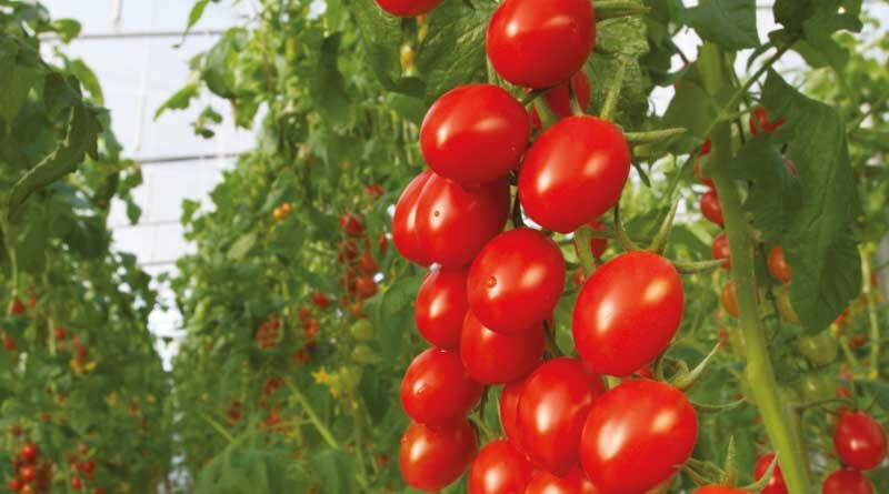 Bayer to launch organic vegetable seeds portfolio enabling greater access to certified organic market