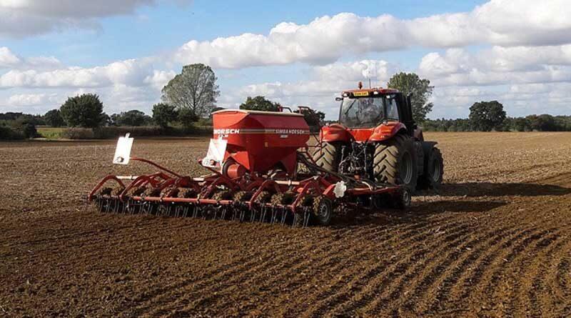 Establishing a resilient wheat crop