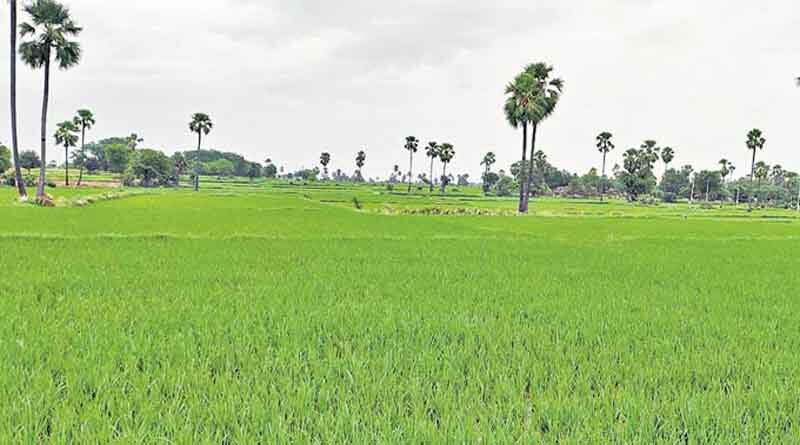 Record Foodgrain production of 150.50 million tonnes estimated in Kharif Season