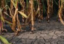Crop limitations in a water-deprived environment.