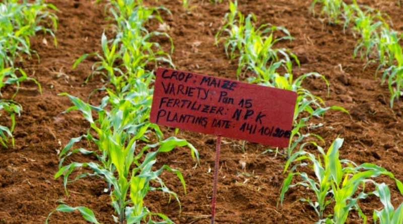 Tailored Approach To Fertilizer Use Can Achieve Triple-Wins For Smallholder Farmers