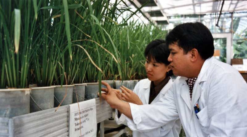 Global success in plant breeding celebrated by FAO and IAEA