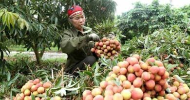 Vietnam's agricultural products conquer the demanding EU market