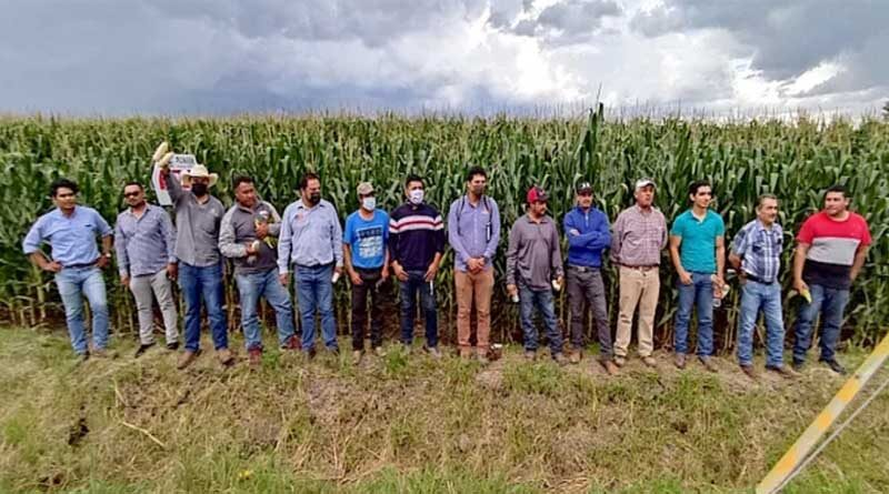 CIMMYT becomes partner of choice in PepsiCo's sustainability strategy