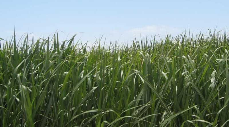 Proven Irrigation Solutions for Sugar Cane