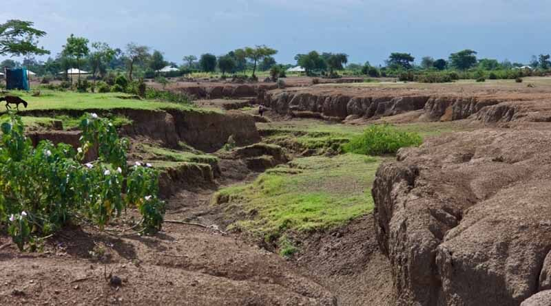 Urgent need for new approach to combat global grassland degradation
