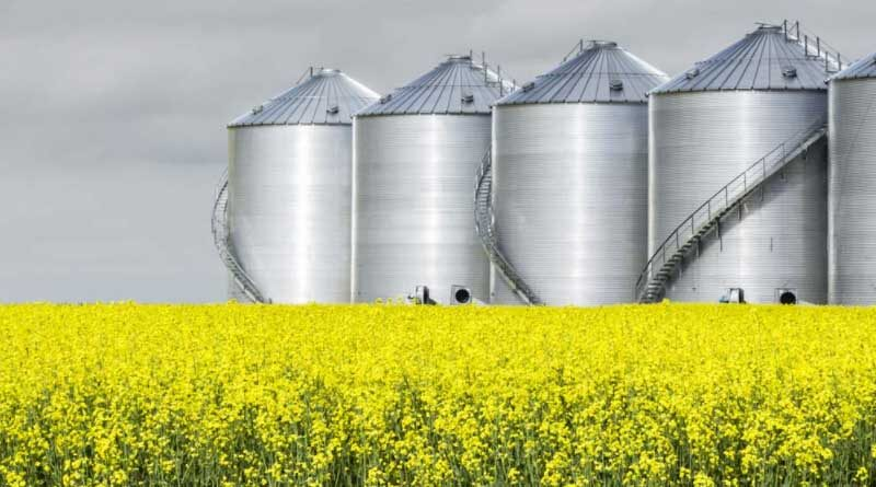 FBN® Yield Prediction Tool Supports In Season Decision Making