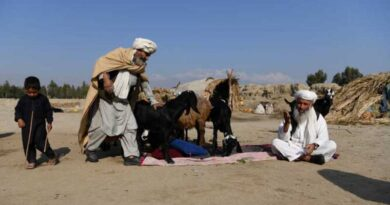 Afghanistan: FAO urges G20 countries to increase support for rural farmers