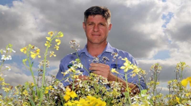 Competitive crops a crucial key in weed management