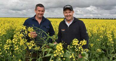Third-generation Eyre Peninsula farmer reaps TruFlex® canola rewards