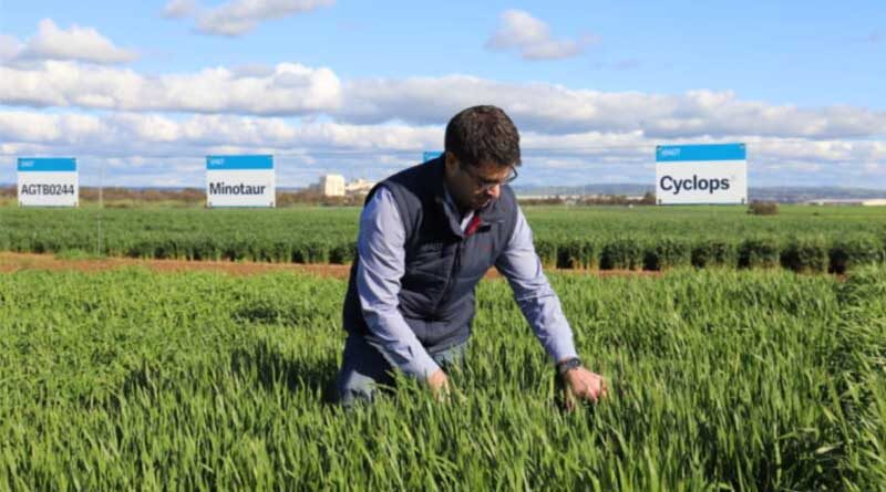 Australia: New barley varieties give growers a double benefit