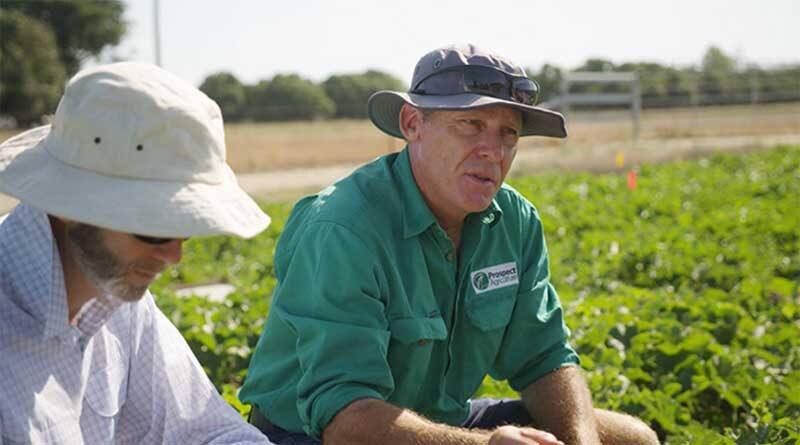 SIVANTO prime is tough on key horticultural pests, with safety for beneficial species