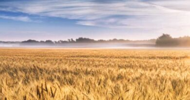 Case Study: Increase Yield While Reducing Costs and Minimizing the Environmental Footprint