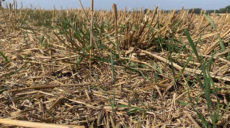 Fresh approach to stale seedbeds