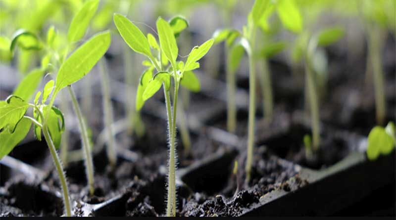 Plant sciences, data sciences, artificial intelligence (AI) to help  develop agricultural climate-proof crops