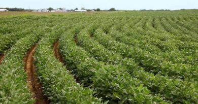 USDA forecasts US corn and soybean production up from 2020