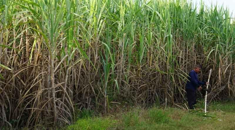 CM yogi raises sugarcane MSP by ₹25/quintal