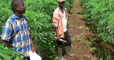 Seeking Climate-Smart Strategies For Root, Tuber And Banana Crops In Central Africa
