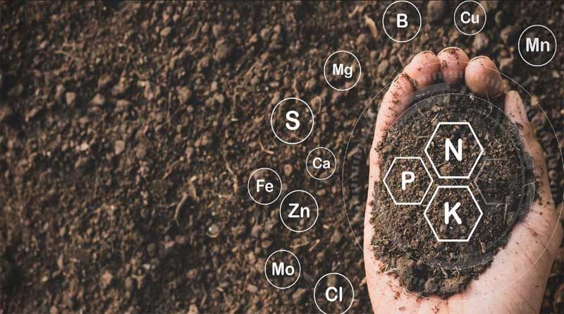 How to Maximize Your Nutrient Program with Organic Fertilizer
