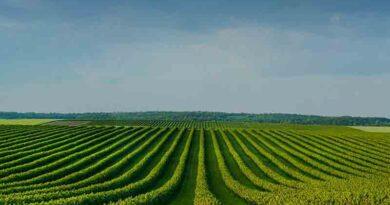 China set to reap increasing autumn grain output despite rains
