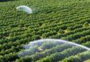 Nutrient Based Subsidy (NBS) rates announced for Phosphatic & Potassic (P&K) Fertilisers 2021-22