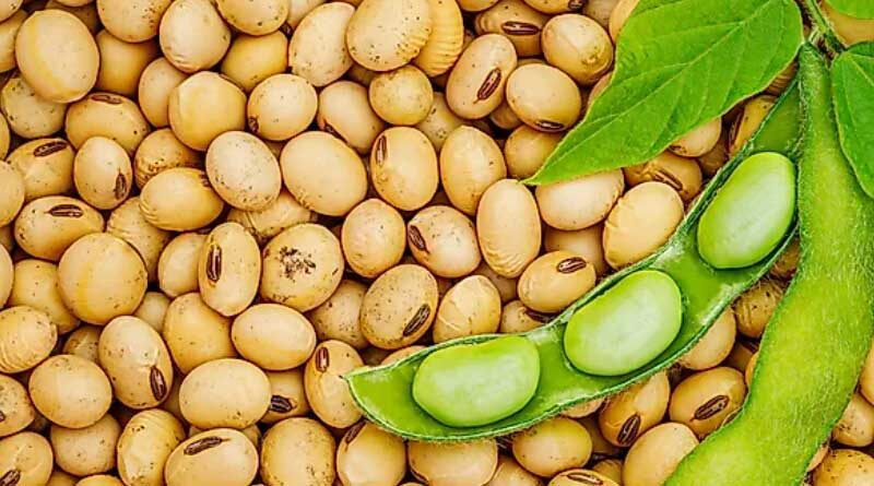 SOPA survey shows 13.71% rise in soybeanoutput at 118.889 lakhMTs