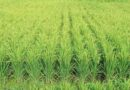 Nearly 30,000 farmers benefitted from paddy procurement under KMS 2021-22 so far