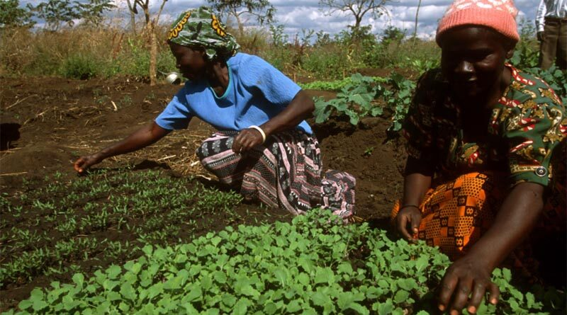 Committee on World Food Security (CFS) kicks off with a call for agri-food systems transformation